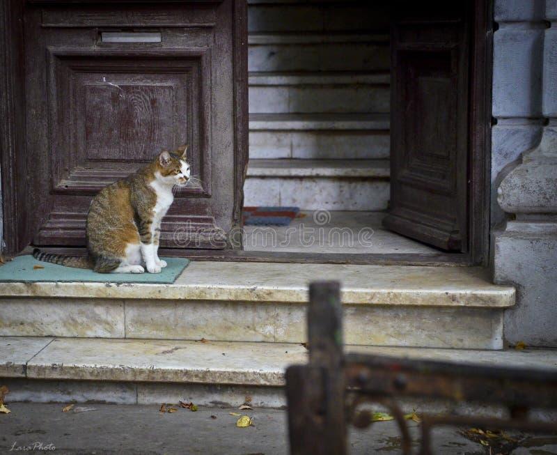 Gato perdido adulto que se sienta en una alfombra sucia en una entrada constructiva con la puerta abierta de madera y las escaler foto de archivo libre de regalías