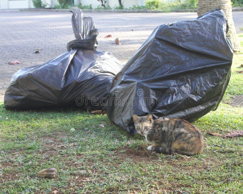 Gato perdido cerca de bolsos de basura imagen de archivo