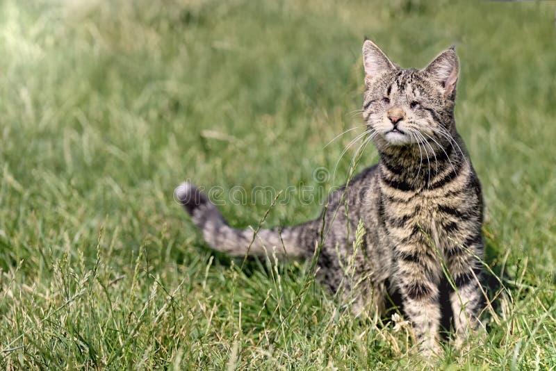 Gato perdido ciego que se sienta en un prado fotografía de archivo libre de regalías
