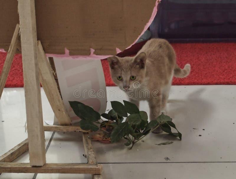 Gato perdido fotos de archivo libres de regalías