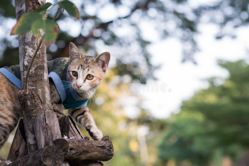 Gato perdido de pelo corto foto de archivo