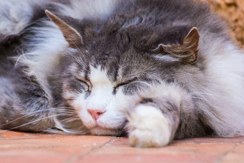 Gato perdido el dormir fotografía de archivo