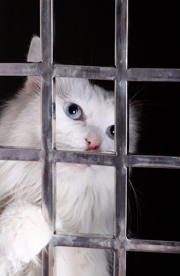 Gato perdido en jaulas. foto de archivo