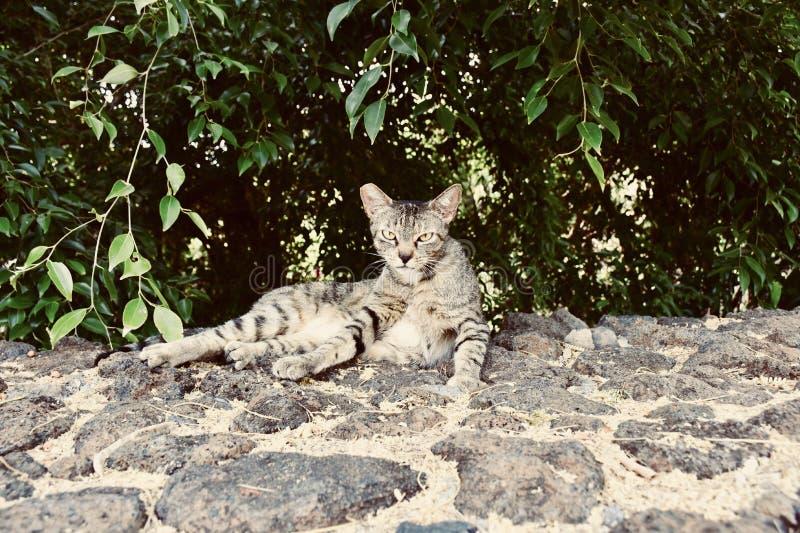 Gato perdido en la isla grande en Hawaii imagenes de archivo