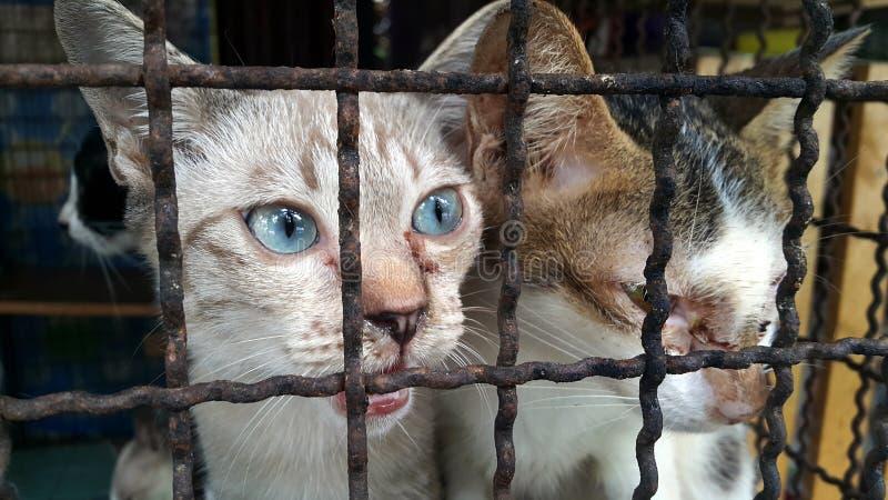 Gato perdido, gato pobre foto de archivo libre de regalías