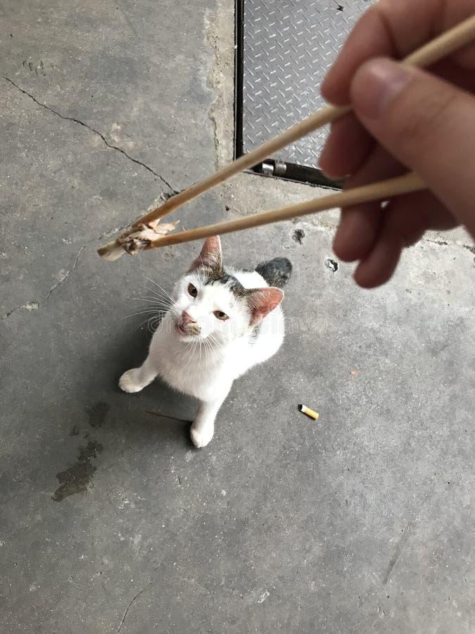 Gato perdido hambriento imagenes de archivo