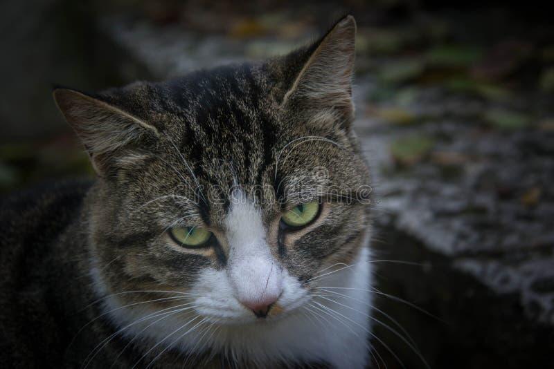 Gato perdido hermoso que se relaja en un banco, animal doméstico del cutе, retrato del primer fotos de archivo libres de regalías