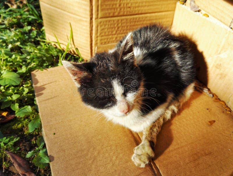 Gato perdido lastimado imagenes de archivo