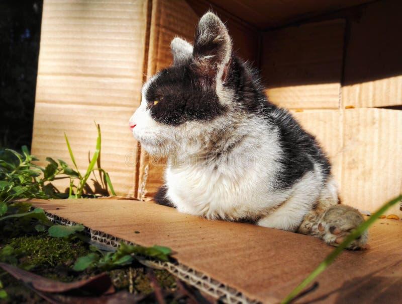 Gato perdido lastimado 2 foto de archivo libre de regalías