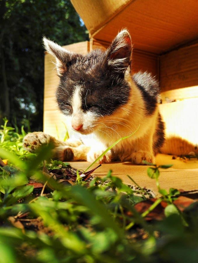 Gato perdido lastimado 3 imagen de archivo libre de regalías