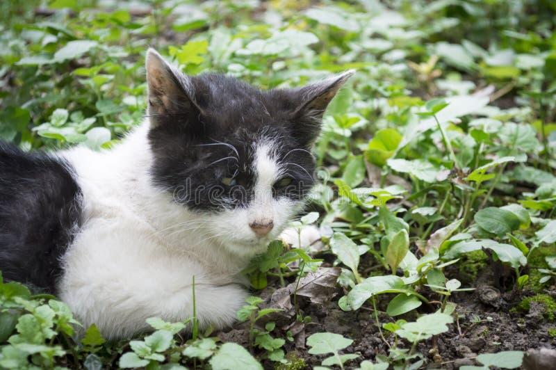 Gato perdido lastimado fotos de archivo