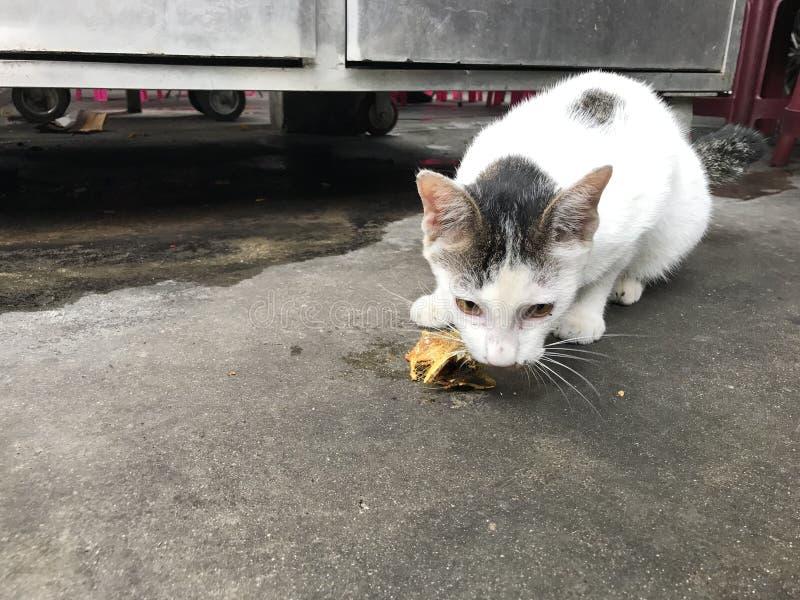 Gato perdido prudente imagen de archivo libre de regalías