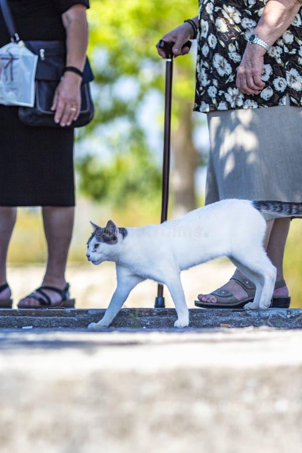 Gato perdido que camina entre turistas en la orilla del lago Kerkini, Grecia fotos de archivo