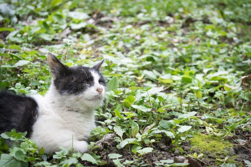 Gato perdido solo fotos de archivo libres de regalías