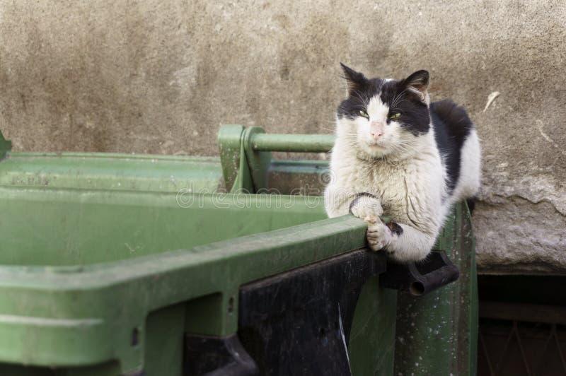 Gato perdido sucio lamentable que miente en el envase asqueroso de la basura fotografía de archivo
