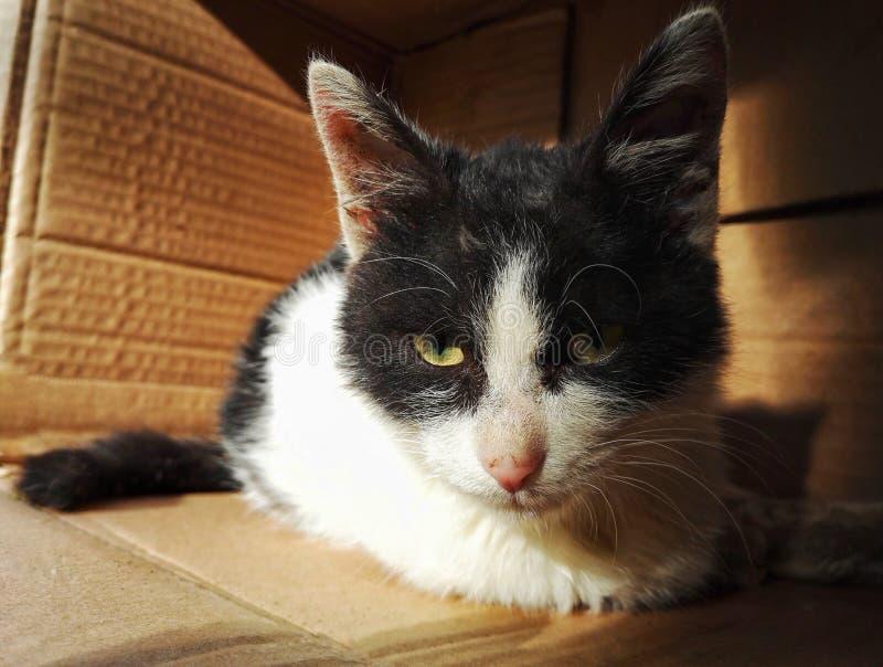 Gato perdido triste fotografía de archivo libre de regalías