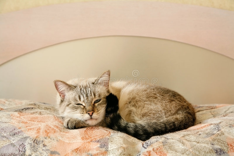 Gato perezoso en el dormitorio fotografía de archivo libre de regalías