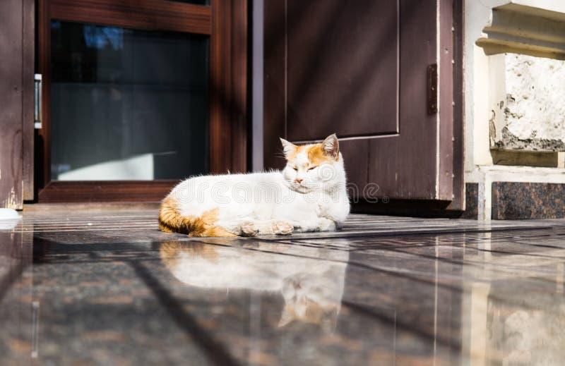 Gato perezoso que duerme en el piso de mármol en luz del día foto de archivo libre de regalías