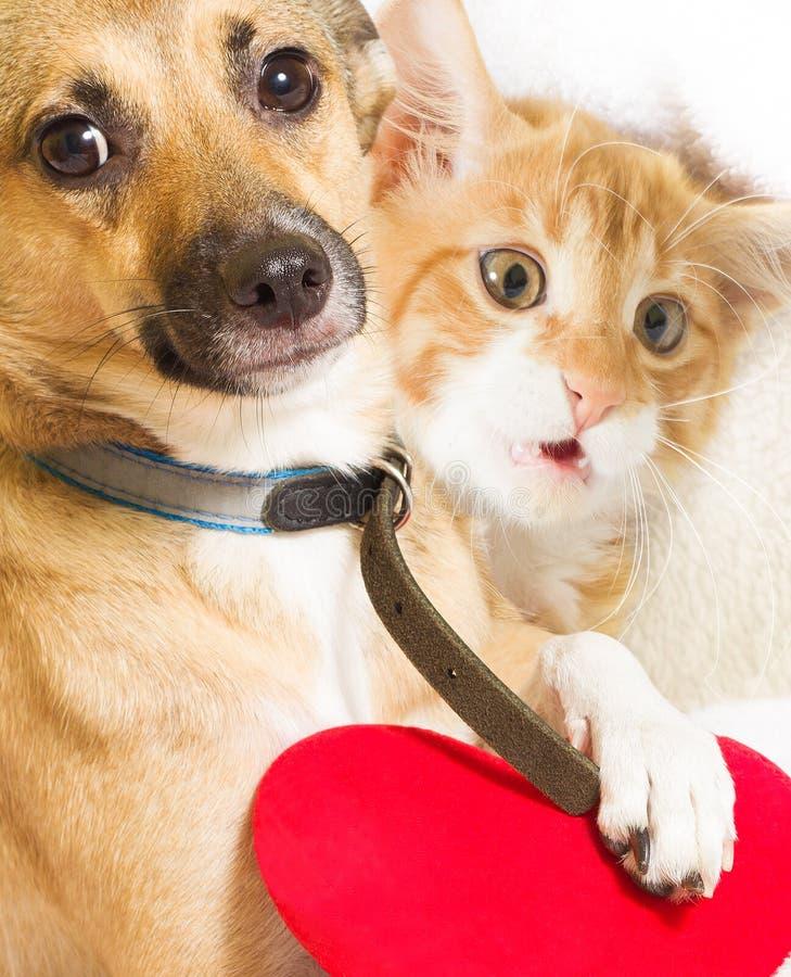 Gato, perro y corazón fotos de archivo