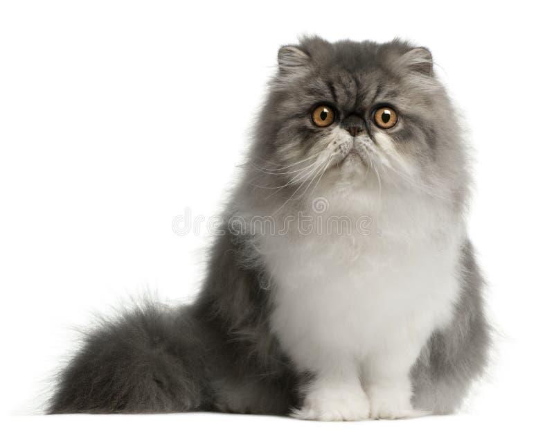 Gato persa, 6 meses, sentándose fotos de archivo libres de regalías