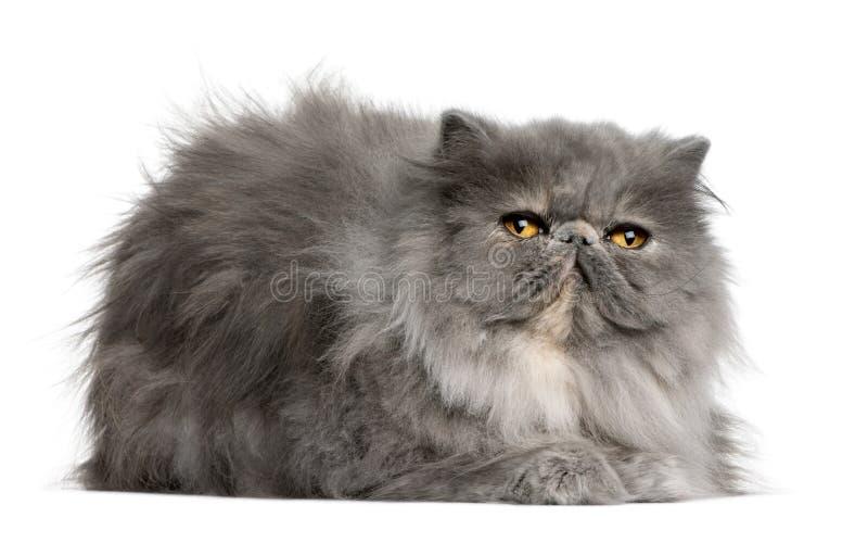 Gato persa, 8 meses imagenes de archivo