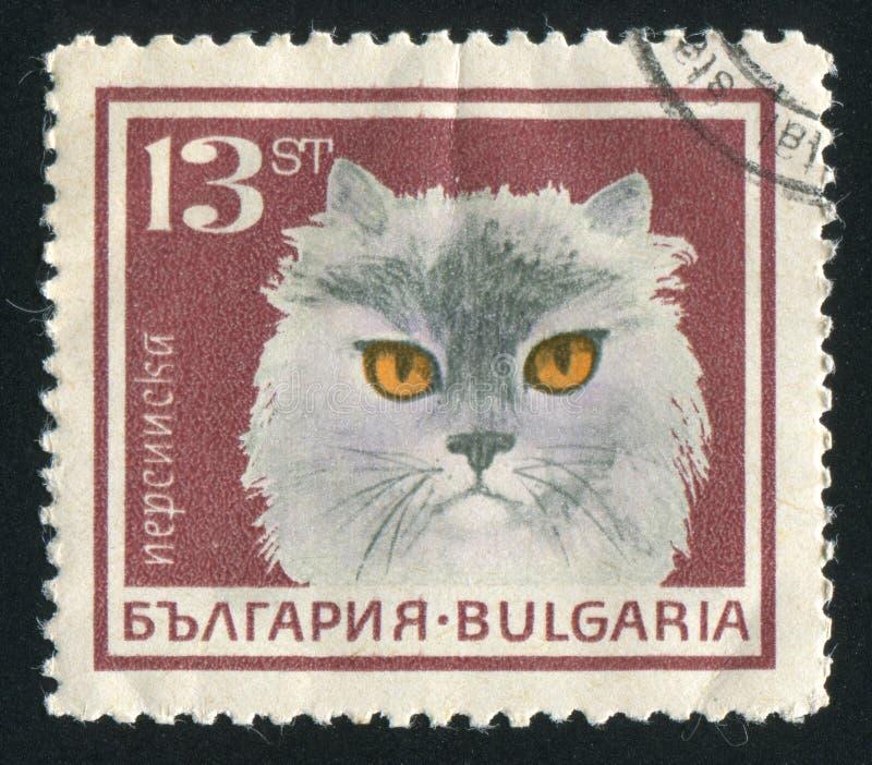 gato persa fotos de stock royalty free