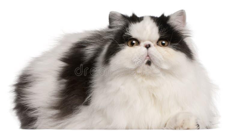 Gato persa del Harlequin, 6 meses, mintiendo imagen de archivo libre de regalías
