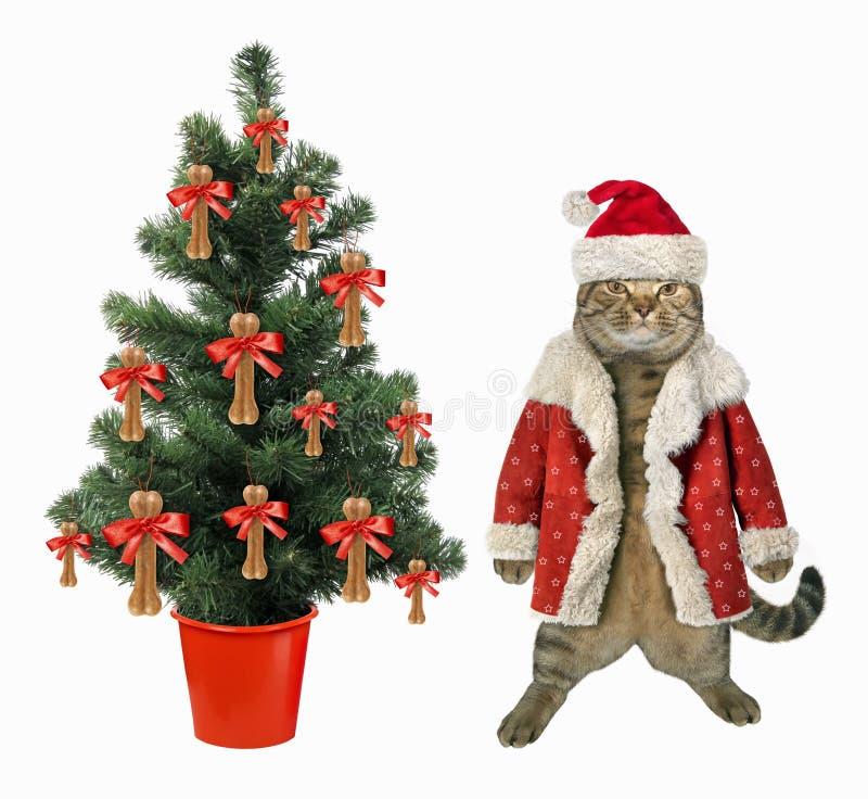 Gato perto da árvore de Natal fotos de stock royalty free