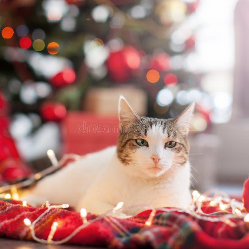 Gato perto da árvore de Natal imagem de stock royalty free