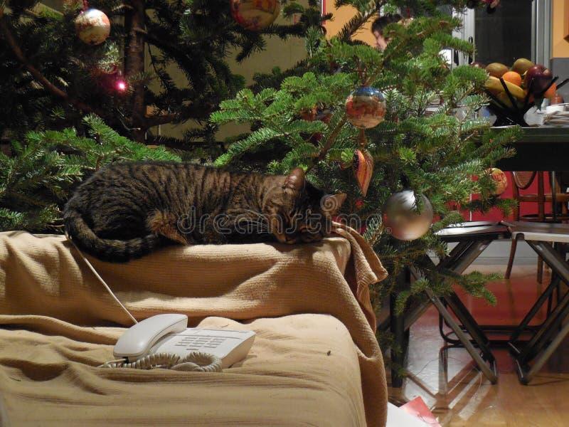 Gato por el árbol de navidad imagenes de archivo
