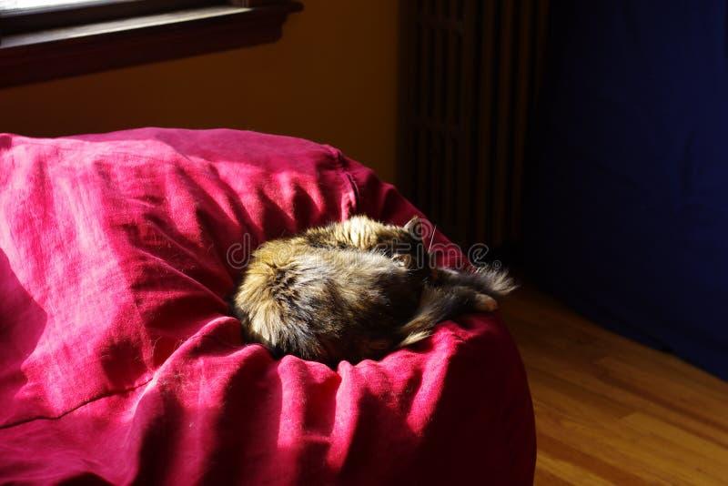Gato por la tarde fotografía de archivo