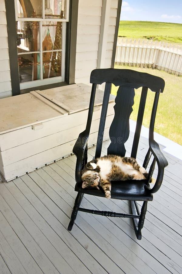 Gato preguiçoso do país do verão na cadeira de balanço da alpendre das traseiras fotografia de stock royalty free