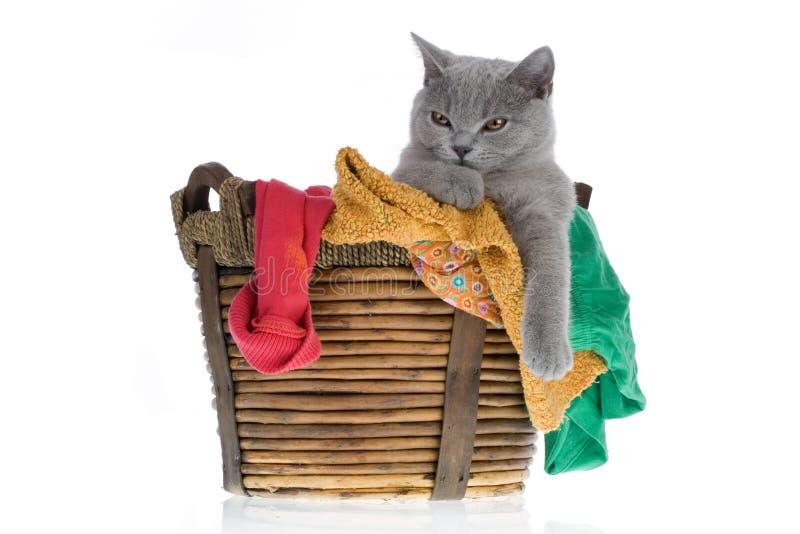 Gato preguiçoso em uma cesta de lavanderia imagens de stock royalty free