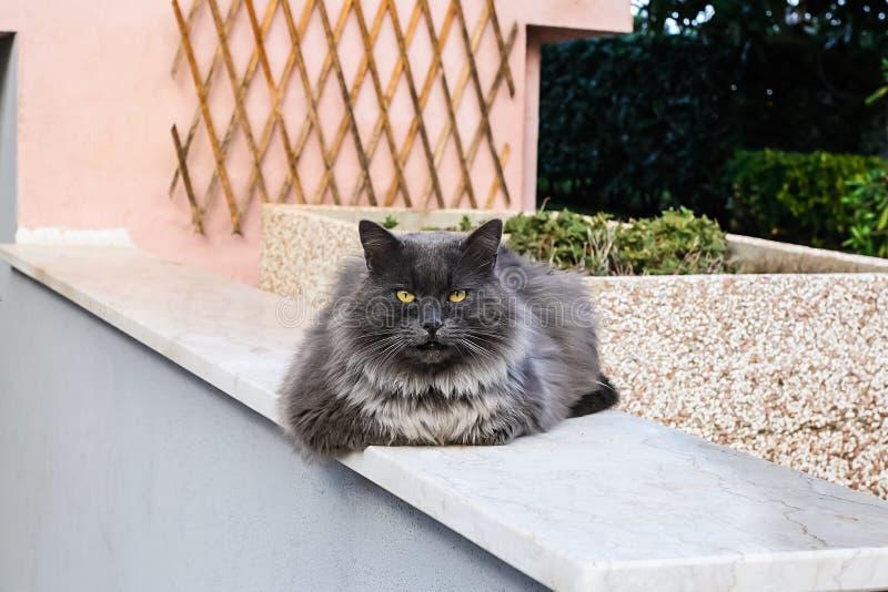 Gato preguiçoso sentado em uma parede imagens de stock royalty free