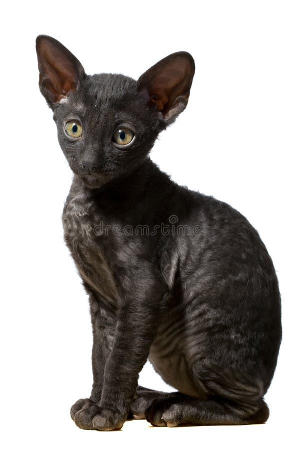 Gato preto foto de stock royalty free