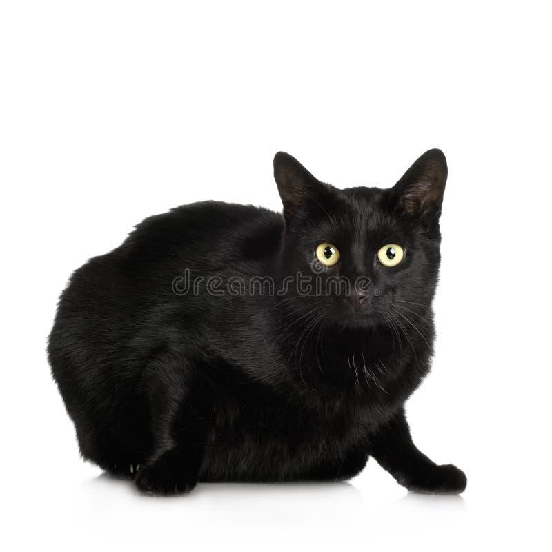 Gato preto (4 anos) foto de stock