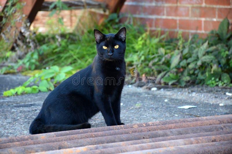 Gato preto imagem de stock royalty free
