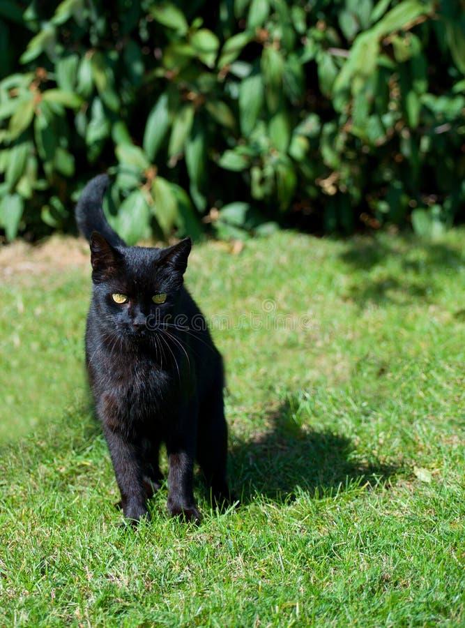Gato preto bonito fotos de stock royalty free
