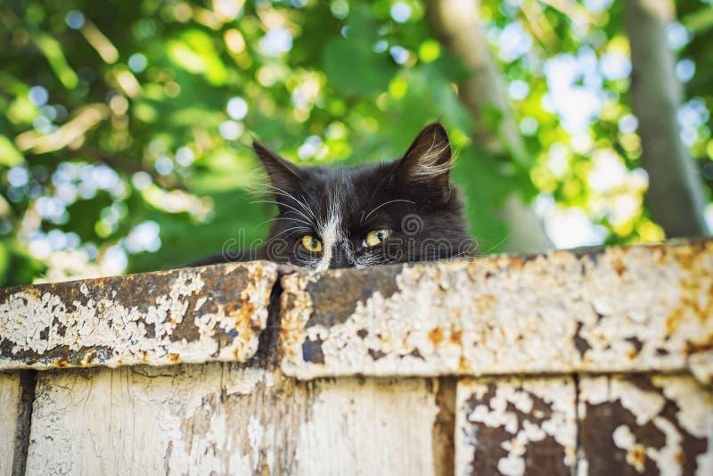 Gato preto bonito com os olhos verdes atrativos que encontram-se na parede velha e que olham diretamente na câmera fotos de stock