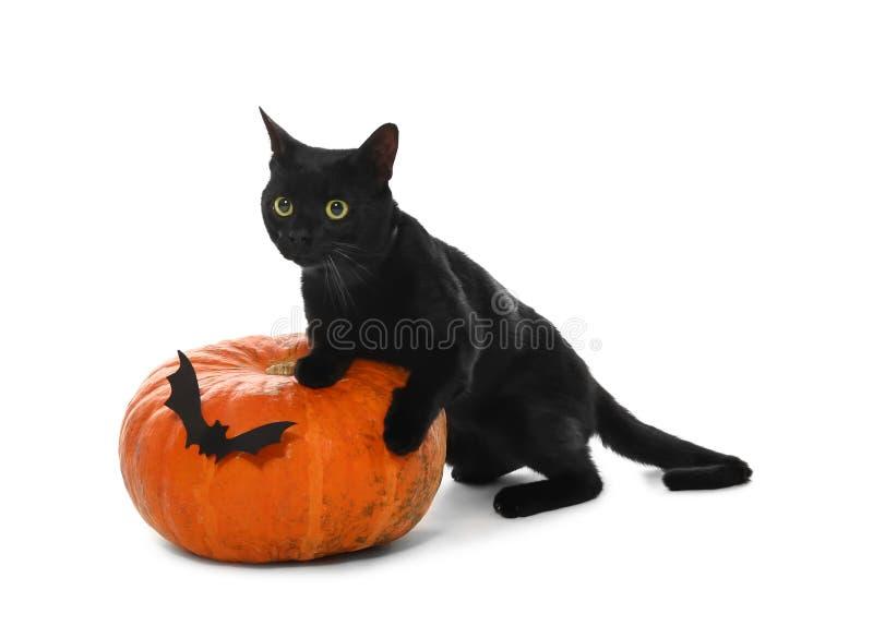 Gato preto bonito e abóbora de Dia das Bruxas no fundo branco foto de stock royalty free