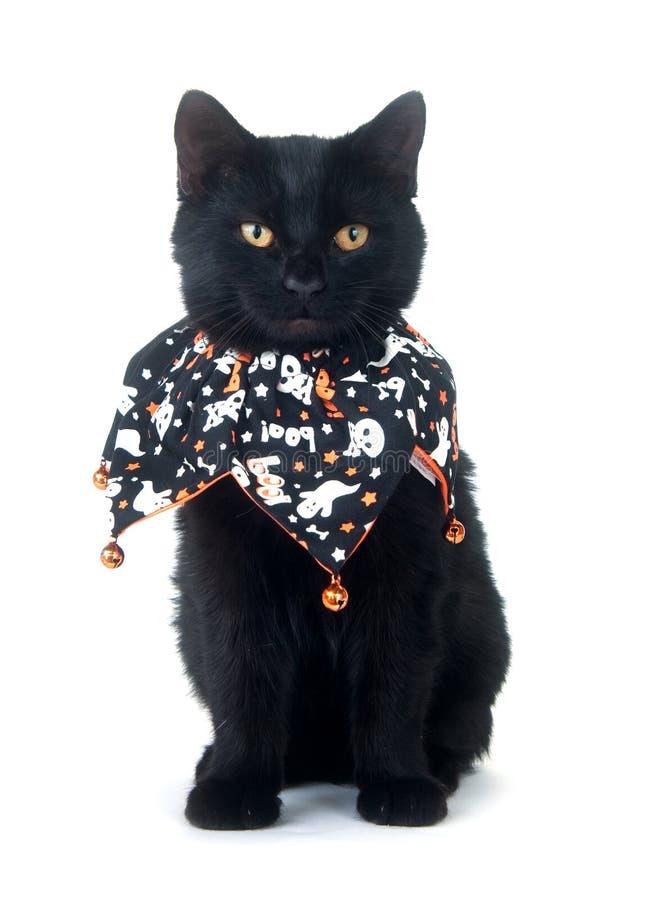 Gato preto bonito no bib de Halloween fotos de stock royalty free
