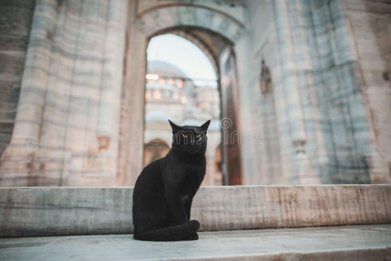 gato preto bonito que senta-se perto da mesquita velha do suleymaniye fotos de stock royalty free