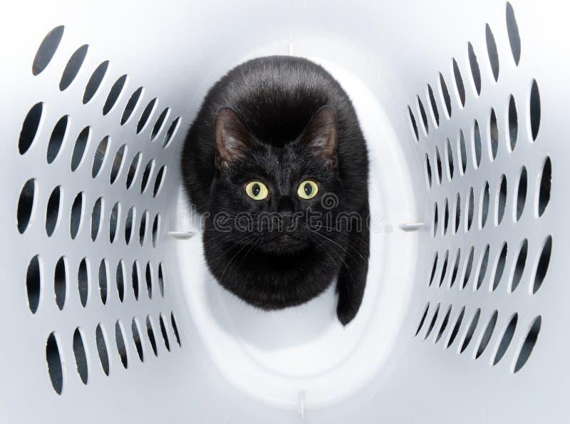 Gato preto brincalhão, brilhante que senta-se em uma cesta de lavanderia branca imagem de stock royalty free