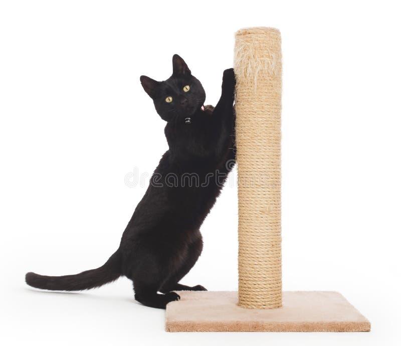 Gato preto com um cargo de risco fotos de stock royalty free