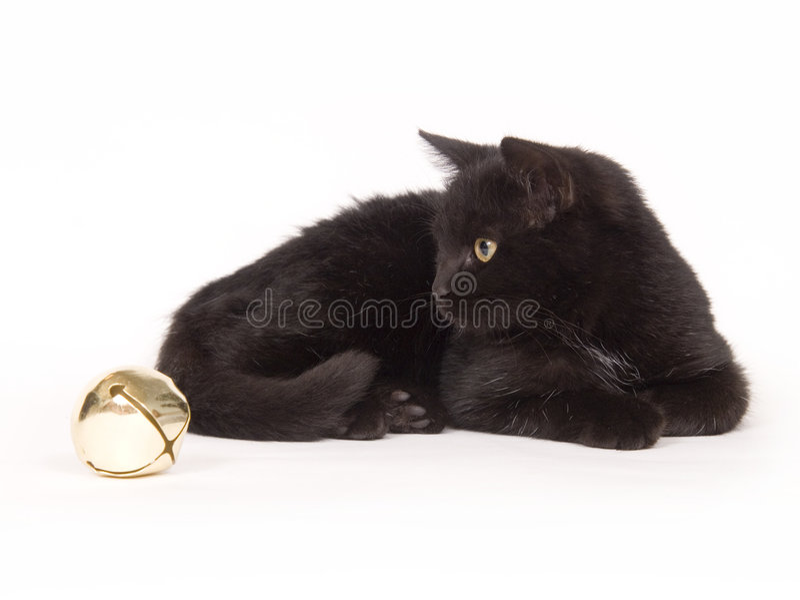 Gato preto com um sino foto de stock