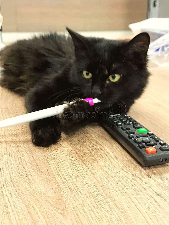 Gato preto comum com pena e ilustração do vetor