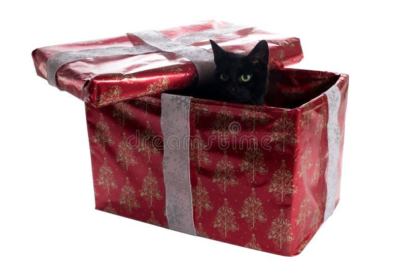 Gato preto dentro de uma caixa do presente de Natal imagens de stock royalty free