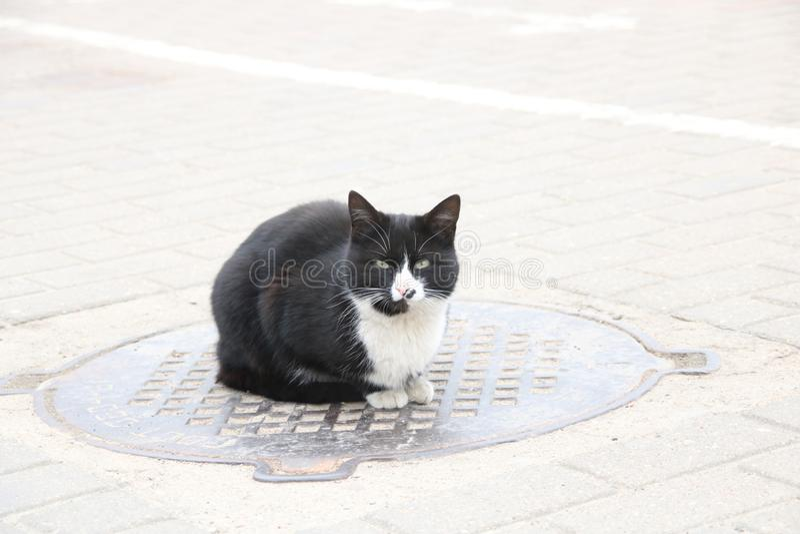Gato preto desabrigado que senta-se no portal, fim acima fotos de stock