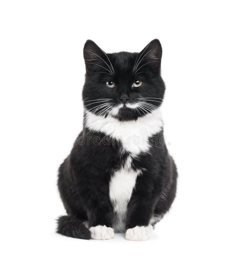 Gato preto do gatinho foto de stock royalty free