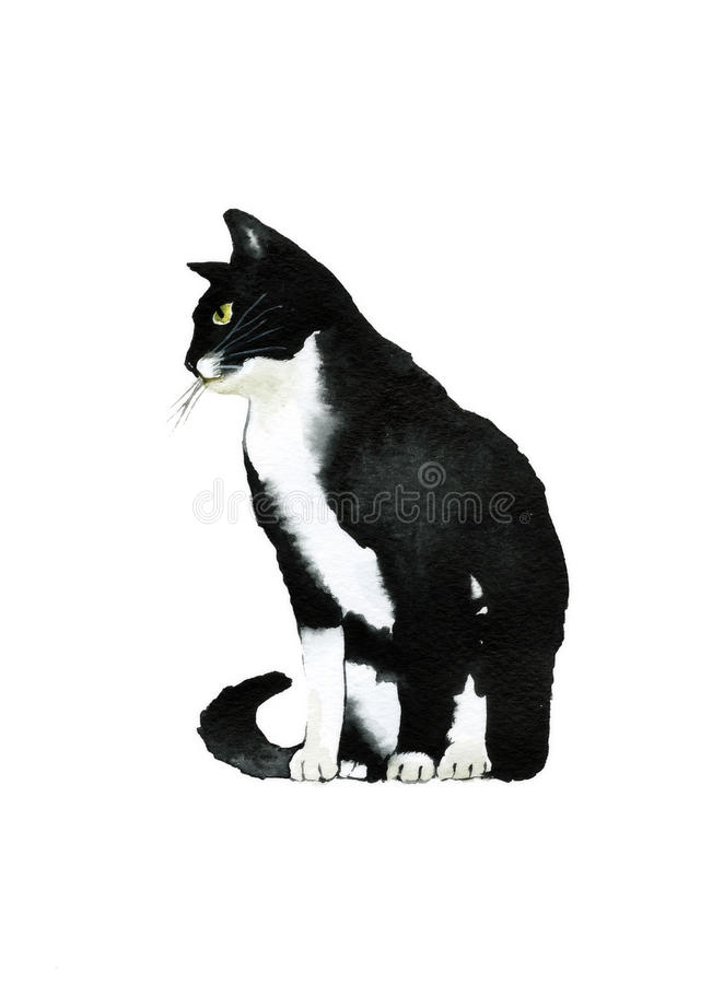 Gato preto e branco da cor de água do lado ilustração royalty free